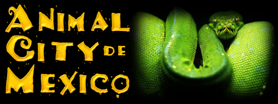 Animal City de Mexico